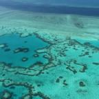 世界最大のサンゴ礁保護で「投資」を=世界初の市場が整備
